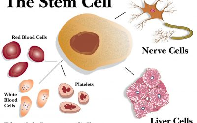 HBOT Stem Cells by Stimulating Nitric Oxide Synthesis.